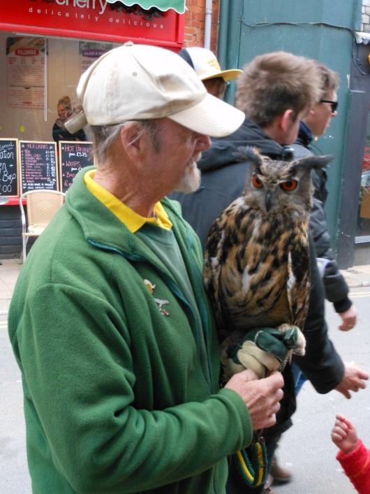 Owl in Totnes