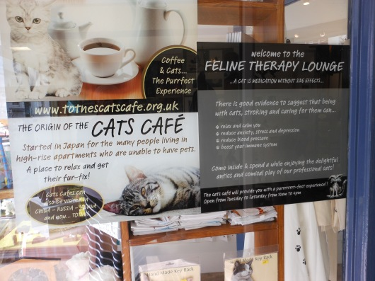 Feline Therapy Lounge
